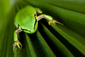 Frog © Andre Boto