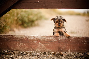 A Dog, On A Gate by Jessica Dalene