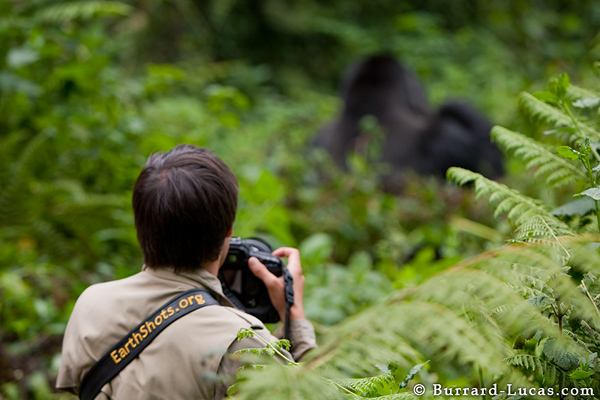 Matthew photographing a silverback gorilla